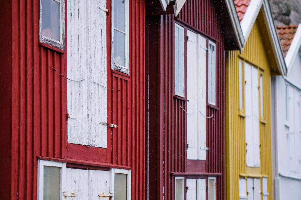 ... colorful II ...